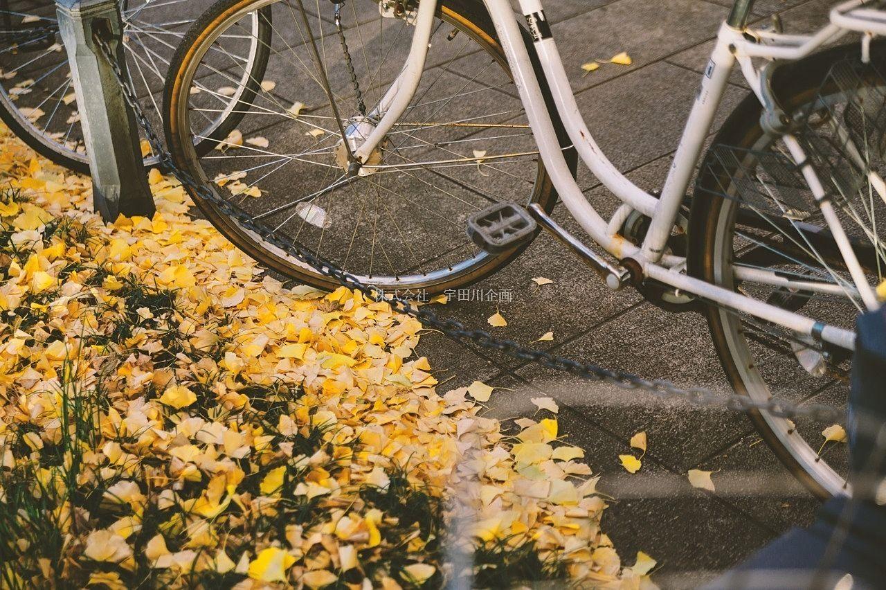所有者不明の自転車を撤去します